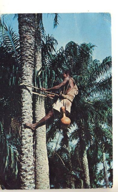 Palm Wine Tapper, Nigeria 1950s. submitted by http://nigerianostalgia.tumblr.com/