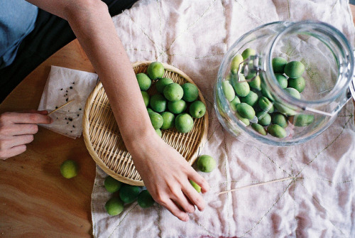 porclaim:  ume-shu making by hiki. on Flickr.