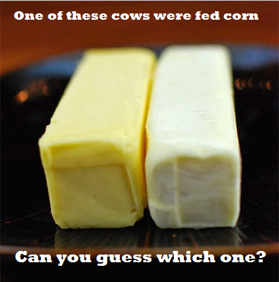 Butter from grass-fed cows turns a bright, almost golden color because of its higher content of Vitamin A. It's also rich in vitamin D and K2, among others. These fat-soluble vitamins are soooo important to a healthy diet! When Dr. Price studied the diets of successful, traditional cultures, he found that their diets contained 10 times more of these fat-soluble activators than the modern American diet of his day. For the best of the best, opt for REAL butter from grass-fed cows! Xoxox Michelle