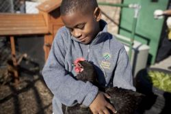 "Solar Panels and Schoolyard Chickens: A Net-Positive Campus- Jenni Schneiderman and Katherine Elmer-DeWitt wrote in Environment, Education and Sustainability When Seattle's Bulitt Center—the ""greenest office building ever""—opens on Earth Day it will symbolize a shift in 21st century priorities towards intentionality, stewardship, and service. It will soon be followed by a net-zero energy hotel in the Fall of 2013. But businesses aren't the only entities striving to meet the parameters of the Living Building Challenge by implementing the most ecologically conscious design and technologies available. A net-zero energy public school in New York City will open in 2014, and at our school on the southwest side of Chicago, the Academy for Global Citizenship, we are building a net-positive campus to house our net-positive community. Continue reading on good.is"