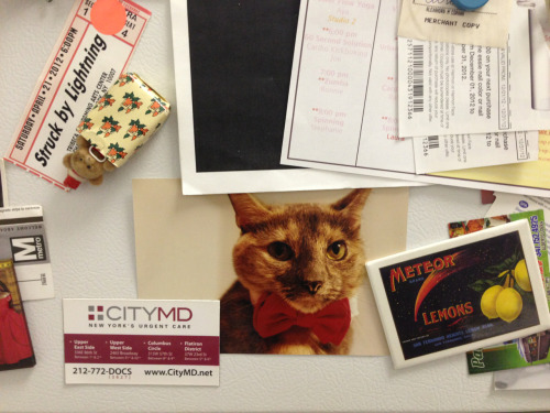 Cat in bow tie on fridge? Cat in bow tie on fridge.