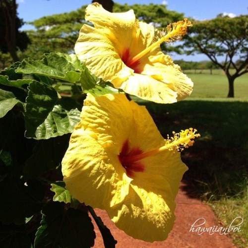 #HappyAlohaness 🌺💛🌺 @taylorsp #BlessedWeLiveHawaii — photo taken by hawaiian_boi