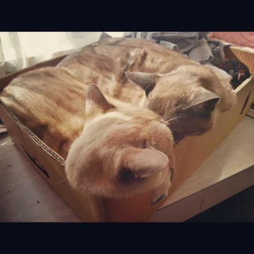 purpleheadedchinaman:  My bread cats