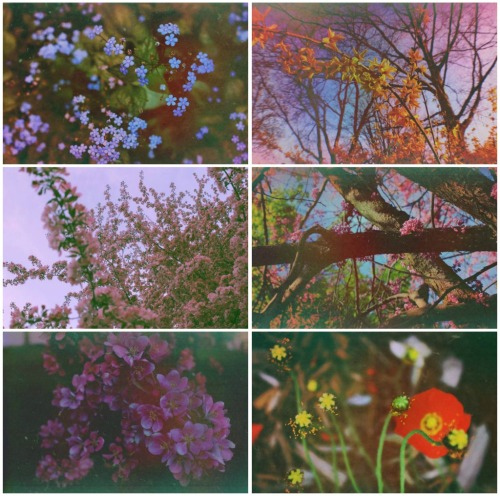 earthwandererphotography:  A collage I made with some of the recent flower photos I have taken.