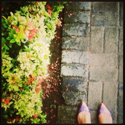 #monday #shoes #flowers #leaves #purple #orange #green 🍃🌼🍂