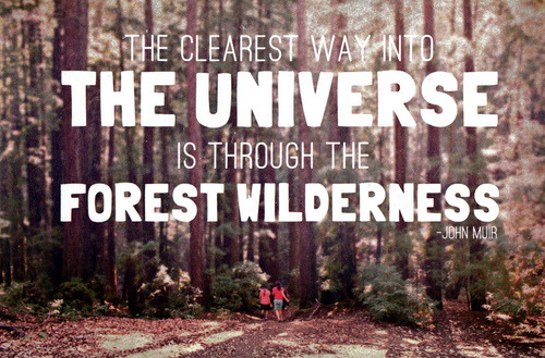 visualgraphic:  The Forest Wilderness