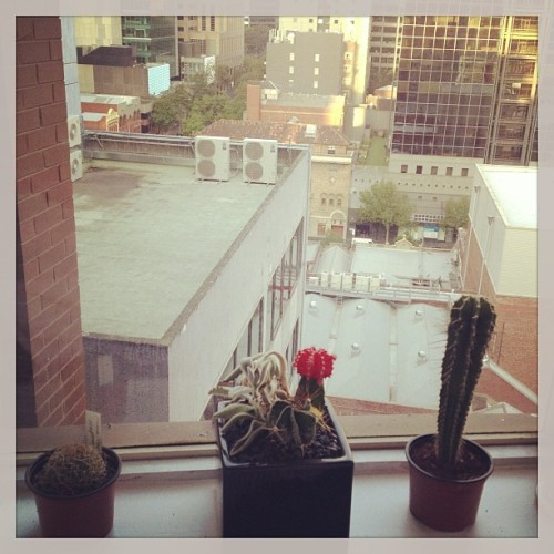 Chillin' with @thatdamnjessho's cacti.