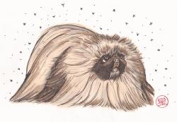 Barry the Pekingese!