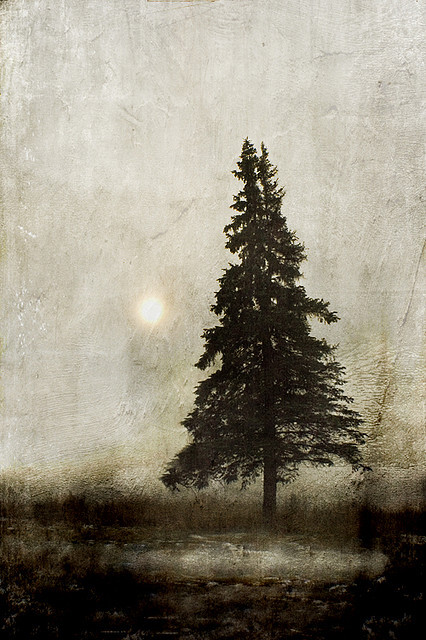 treeroots:  winter light… by jamie heiden on Flickr.