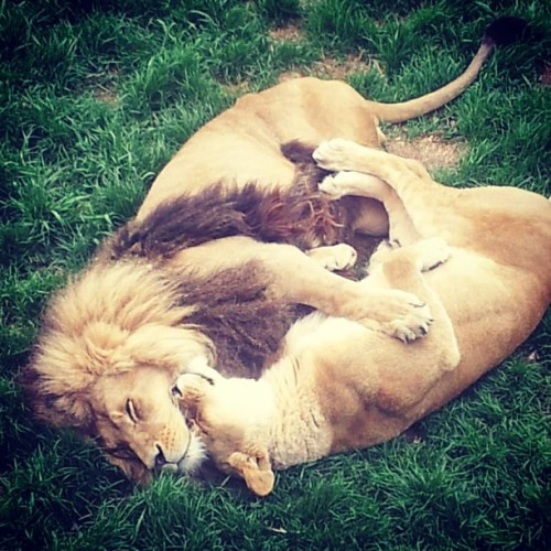 9gag:  Look who we caught cuddling at the Zoo..