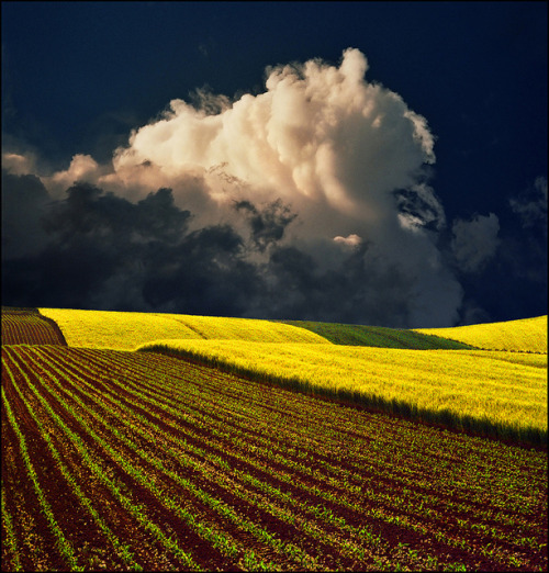 wistfullycountry:  Yellow field by Katarina 2353 on Flickr.