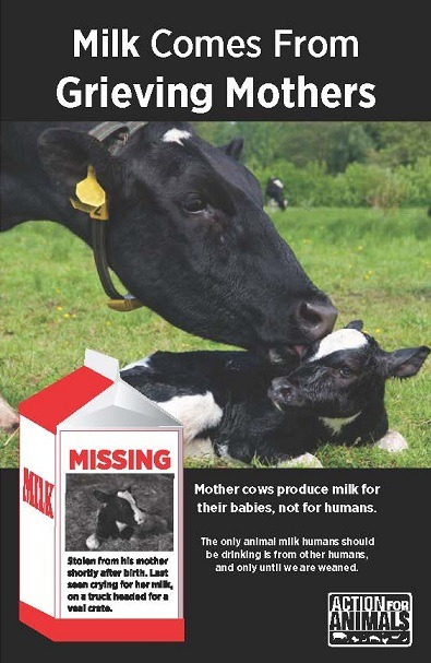 Milk Comes From Grieving Mothers