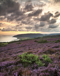 llbwwb:  Exmoor (by peterspencer49)