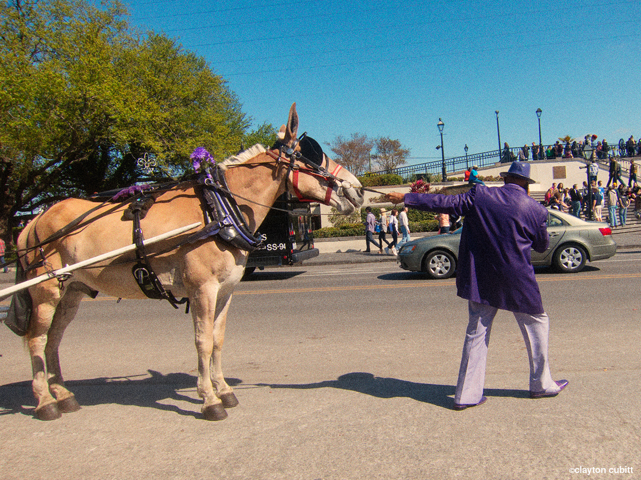 Man in purple suit trying to move his mule, New Orleans  (0766)