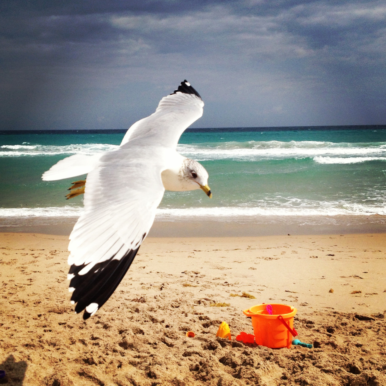 Took this today in Delray Beach. this seagull didn't leave my dude for 3 hours!