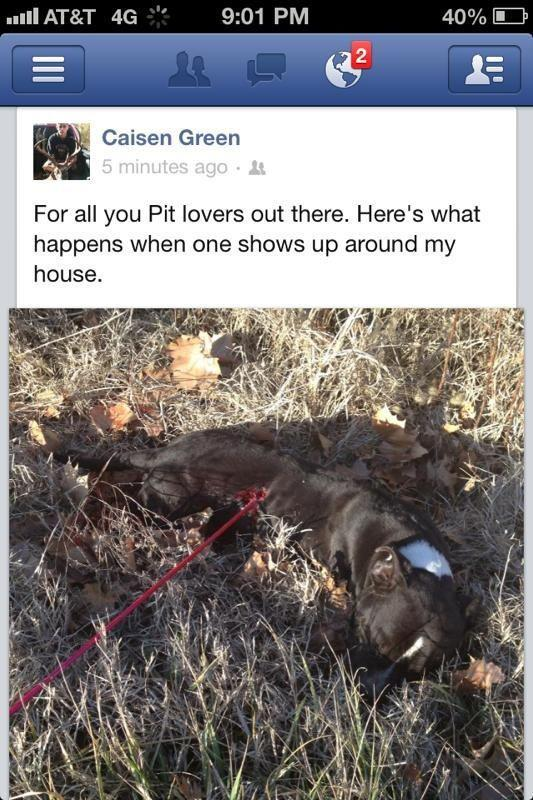 "Teen shoots Pit Bull with spear gun JUST BECAUSE it was near his home! FBI's Website for reporting: http://tips.fbi.gov Report this scum with all the info listed. Please DO NOT message this animal abuser and harass him, as this needs to be on the low to catch him. This boy seen here is an animal abuser. He injured a pit bull because it was near, his own home! The pit bull did not harm anyone in this case and certainly did not bother this teen, named ""Caisen Green,"" but just wandered around and then got shot, as seen with a spear. He sent out a message on Facebook his timeline saying ""for all pit bull lovers this is what happens when one shows up around my house."" His Facebook page, which also has a picture of him and a dead deer that he killed then took a picture of. This teen needs to be found and arrested/charged for animal cruelty. This needs to be spread like a wildfire, we are in desperate need to find this teen so another animal doesn't get harmed. He snapped a shot of this dog while injured, and thought it was funny. Please share this info with everyone and every pit bull lover out there. Who knows, your pit bull could be next! Someone mentioned he had his FB location on and found out his info. The telephone number to report to his local police is 918-772-2020 he lives at the cross streets of South Molly Brown Mountain Rd and South Blue Top Road on W Cookson Bend Rd coming from S Blue Top Rd toward S Molly Brown Mountain Rd he is located on the right side of the road where Cookson Bend Road and Highway 82 connect. This is the info to give the police and report this. His Facebook is below along with his Twitter account. PLEASE DO NOT REPORT HIM TO FACEBOOK OR TWITTER AND INSTEAD REPORT TO THE FBI/INTERPOL FOR CRIMES AGAINST AN ANIMAL! Here is the link to do so:http://www.interpol.int/public/contact.asphttp://www.ic3.gov/default.aspx Caisen Green's Facebook & Twitter accounts: Facebook: http://www.facebook.com/profile.php?id=100001942005656 Twitter: https://twitter.com/caisen_hunter5 Below is also info from Pet Pardons of whom he posted this photo to their Facebook page's wall: Via Pet Pardons: This horrific, heartbreaking photo of violence showed up on our newsfeed tonight. We don't know any more details, but we do know the person who posted this photo can be found at: http://www.facebook.com/profile.php?id=100001942005656 More info regarding this abuser:  Caisen Green & his mother's contact info are listed below. Please repost this & take this information to police.   Caisen & Beth Green Cookson Game Refuge Road, Tahlequah, OK 74464 Contact number : 918-457-5598 Mother: BETH CHOATE GREEN Caisen attends: Sequoyah Indian High School Caisen's Girlfriend: BROOK RAYLEE BAILE   Oklahoma Humane Society: http://www.okhumane.org/about/contact-information  Local Fox23 News: http://www.fox23.com/content/contactus/default.aspx  Fox23 Facebook: https://www.facebook.com/fox23news?fref=ts    Cherokee County Sheriffmore info: 213 West Delaware Street, Tahlequah, OK 74464 (918) 456-2583    Adair County Sheriff: 600 Paul Mead Rd , Stilwell, OK 74960 18 mi E (918) 696-2106    Sequoyah Sheriff's Office: 119 S Oak St, Sallisaw, OK 19 mi SE (918) 775-9155 • sequoyahcountysheriff.org sheriff@sequoyahcountysheriff.org    Better yet here: https://www.facebook.com/pages/Oklahoma-State-Bureau-of-Investigation-Authorized-Page/143857662330099"