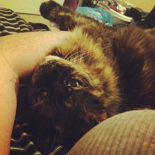 Someone missed her mama.  #cat #catsofinstagram #tortie