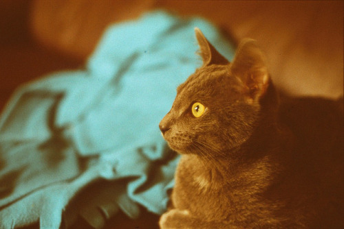 ilovecatsok:  Sunset Strip E6 developed by Pretty in Mad on Flickr.