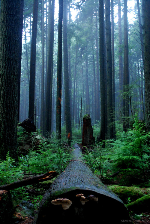 penny-dreadful:  Pacific Spirit Park, 2012. Photo by me.
