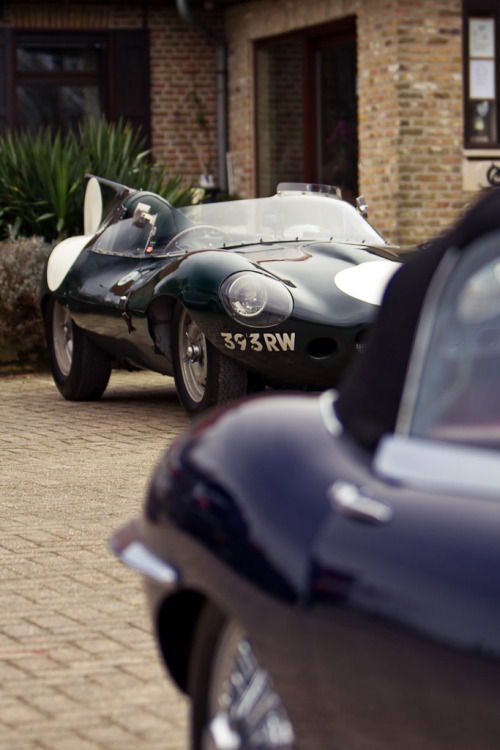 archaictires:  1956 Jaguar D-Type