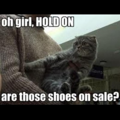 #squaready #lmao #cat #shors #sale #ctfu #lol