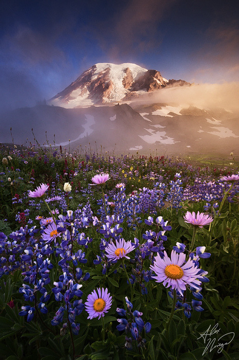 woodendreams:   (by Alex Noriega.)  Wow, I want to go there!