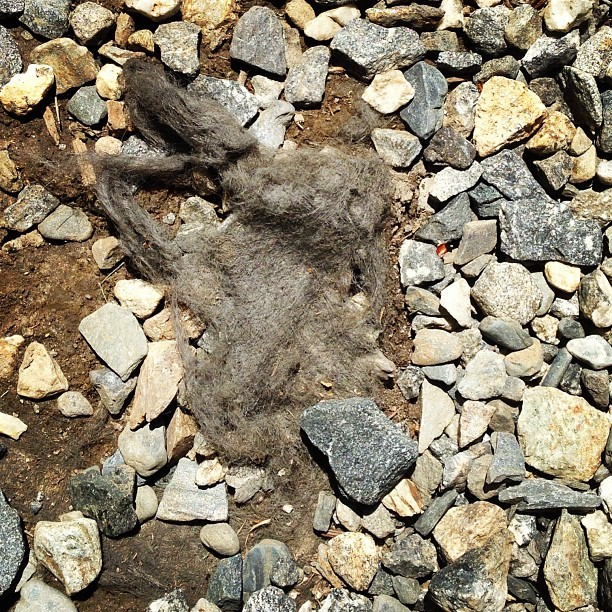 Outdoor dust bunny or discarded grey weave?