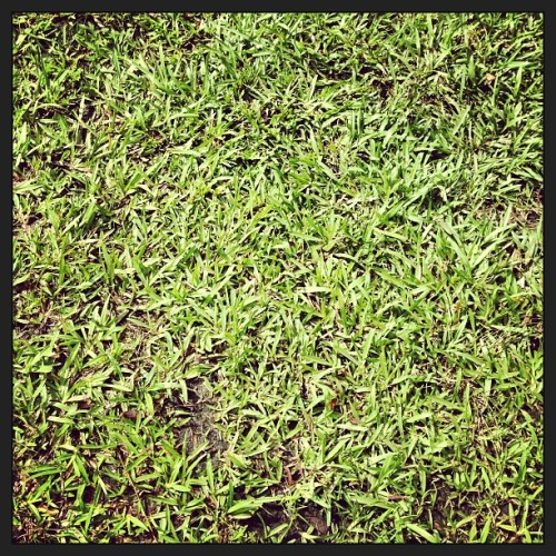 #grass #green #lawn #yard #outside #pretty