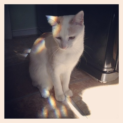 Rainbow kitty 🌈