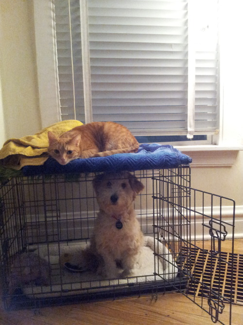 jrvmajesty:  Bunk bed pets.