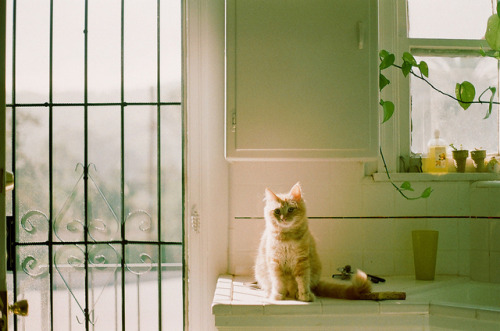 photogenicfelines:  (jennifer helen)