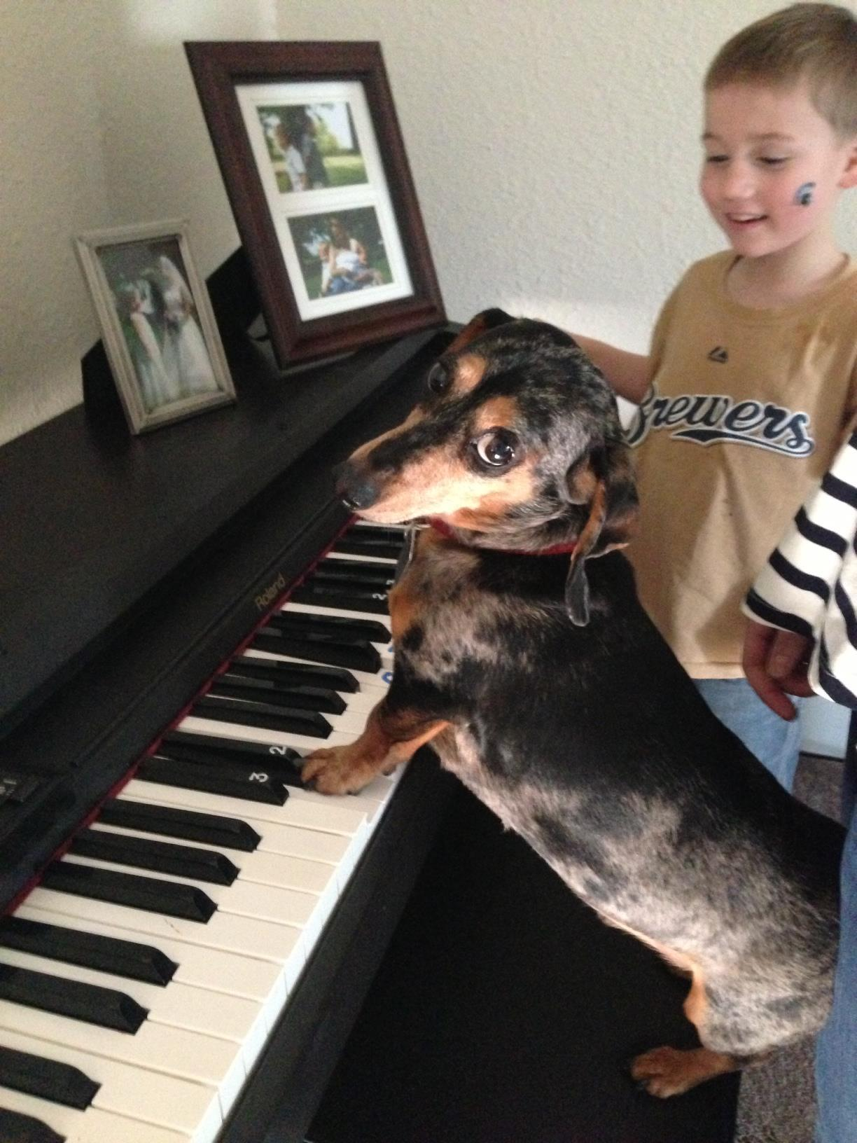 "thefluffingtonpost:  Dog's Piano Lesson Biz Is Booming A Chicago, IL pup named Dudley was finally able to quit his day job as an insurance consultant thanks to a spike in appointments for his side business — teaching piano out of his home. ""He was featured in the Arts section of the Chicago Sun Times,"" says neighbor Stephanie Clarmont. ""Since then, there have been kids and adults coming in and out for hour-long sessions. Seems like business is great for him."" Submitted by Leah Phillips.  That's my Dud!Seriously. That's my dog."