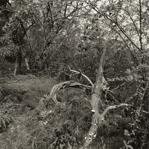 Northbridge Landscape II (2012), silver gelatin photograph. http://james-morris.info/blog/2013/03/23/northbridge-landscape-ii-2012/