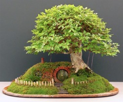 thelittlekaroo:  A wee bonsai garden based off of the shire. Adorabru eh?