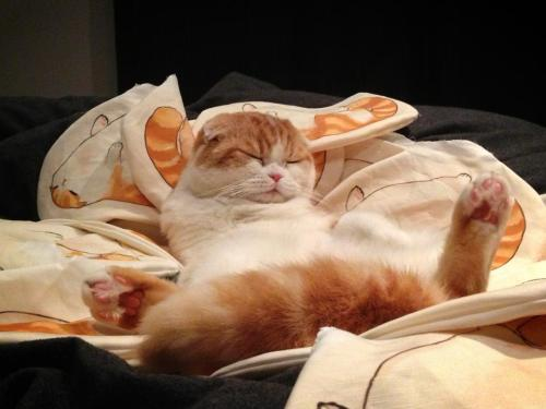 waffles-the-cat:  Waffle upon his throne of waffles :OO  These experimental pillows were handsewn with the help of friends hermes and thousandskies so I only have about 30 of them for Fanime. (Memorial Day Weekend May 24- 27) They will be $20 each. The only other con I'm schedule for this year is Anime Expo. Since there's been interest in these from online, I'm going to sell these online after Fanime, though, I have to figure out how much fabric to order. They will also be $20 each,BUT shipping will be a bit pricey; about $8 to ship from USA to Canada! If you have interest in these, could you please reblog/message/comment so I can get a rough idea of how much fabric to order?