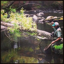 "gin-clear:  14"" stocker bow puttin a nice bend in the 5 wt. Photo credit: @troutdoors #flyfishing"