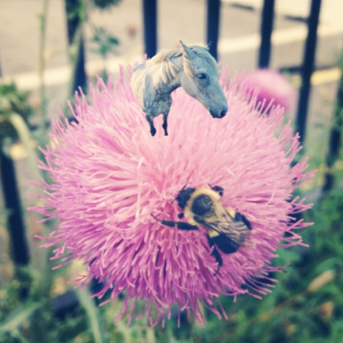 Tiny horses are really territorial when it comes to flowers.