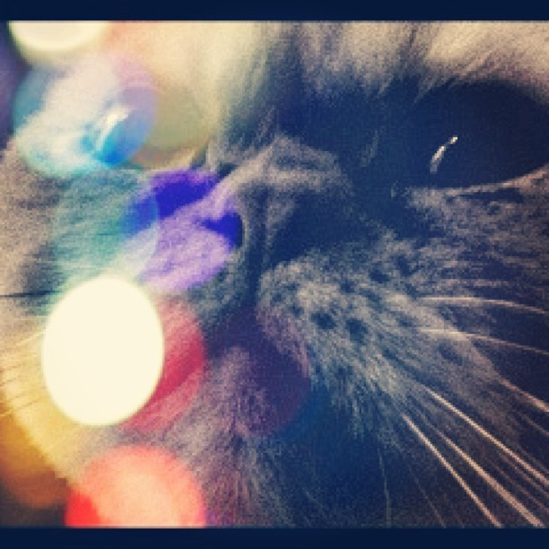 #Playing with #pixlromatic is easy with a good #model. BOOM. #mehcat #popart #fashion #art #entertainment #cat #model #needsanagent #highfashion #closeup #portrait #hilarious #makehenryfamous