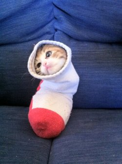 Cutest sock EVER!
