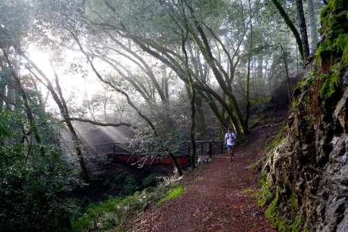 A runner basks in the light of the Steep Ravine Trail during TNF 50 Mile championships.Photo: Bryon Powell
