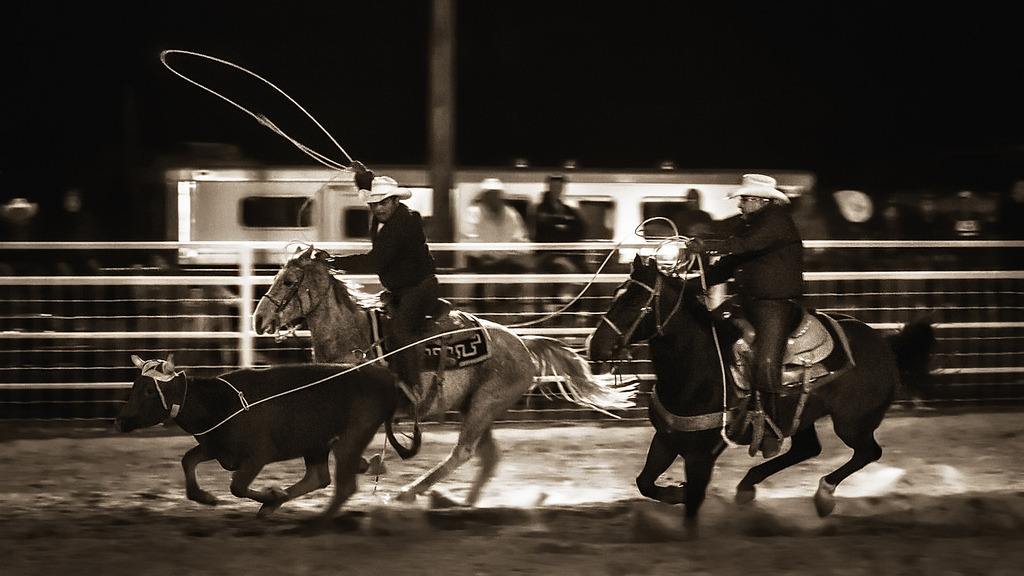Team Roping at the 44th Annual Western Navajo Fair Rodeo in Tuba City, Arizona.