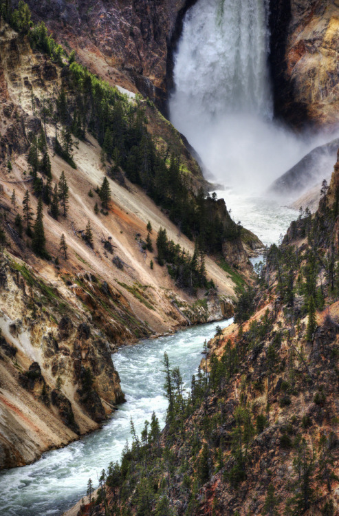 magicalnaturetour:  The Falls of Yellowstone (by Stuck in Customs)