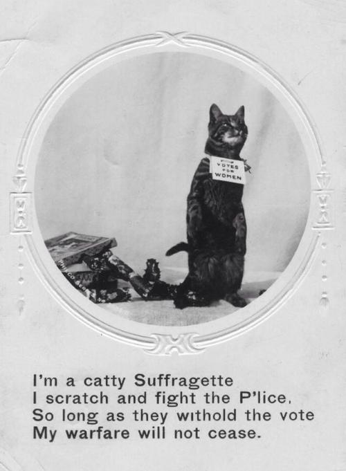 concretefemme:  look at this cop-hating suffragette kitty