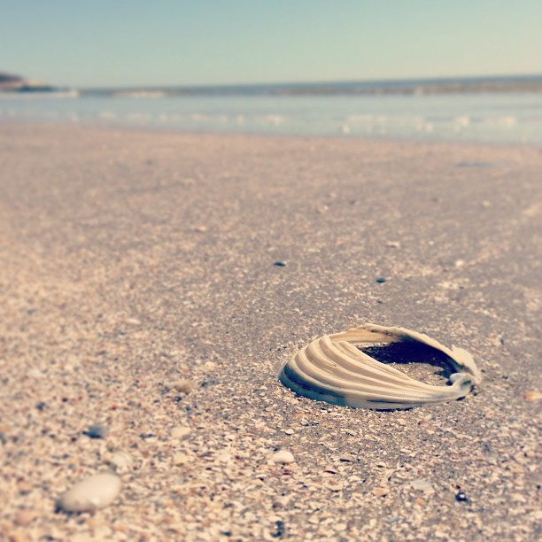 #shell #rikfoto #2013 #march #galveston #texas #beach #sand #sea (at Galveston Seawall)