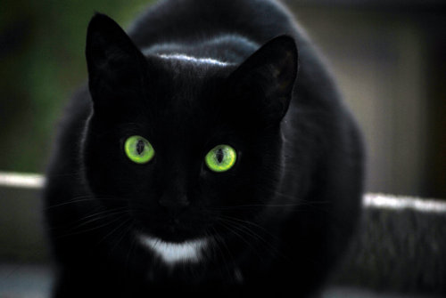 earthlynation:  Black Cat by mocore