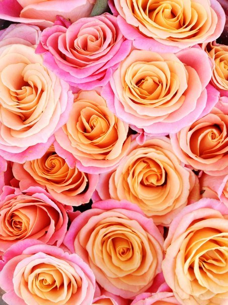 thenightofthedancingflame:  Roses