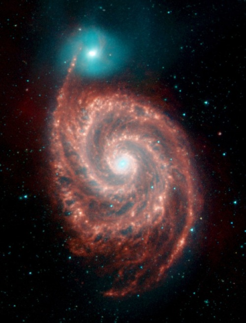 evocativesynthesis:  When Galaxies Collide  The Whirlpool Galaxy, the red spiral, and its companion galaxy, NG 5195 are 23 million light-years from Earth - that's relatively close. IRAC shows the warm dust in red, a sign of active star formation probably triggered by a collision between the two galaxies. (via PBS)