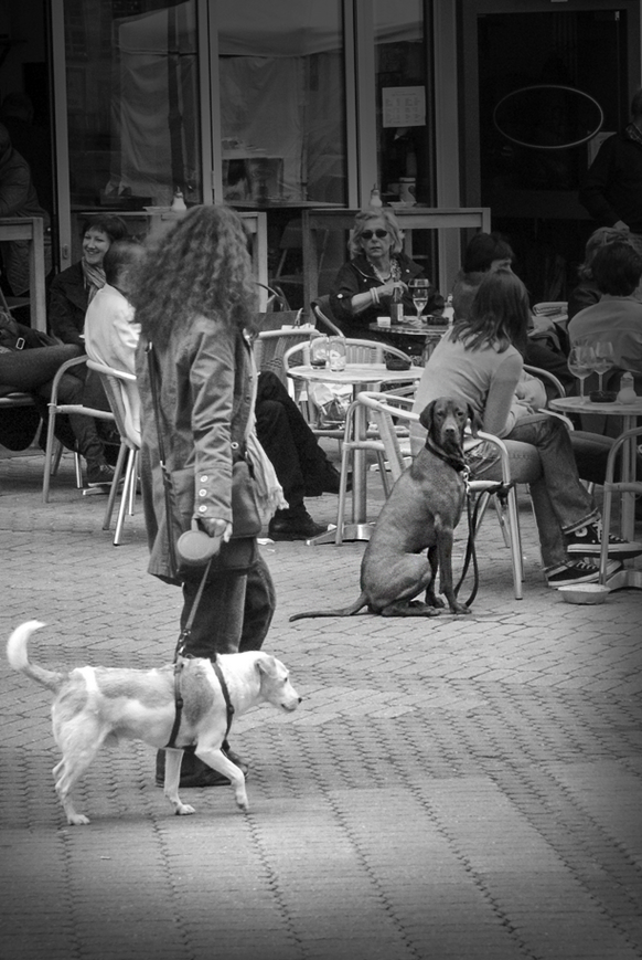 Dog looking interested in another. Taken in 0049911.
