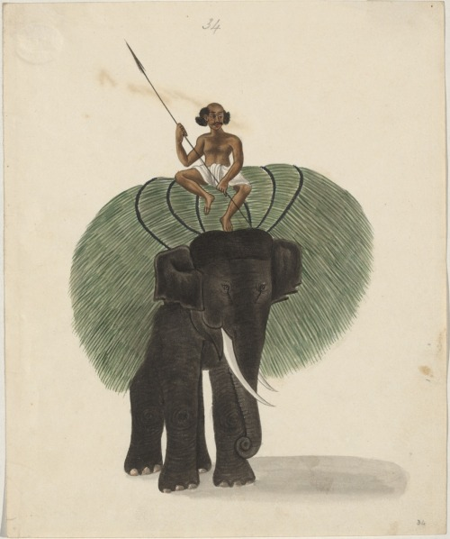 in-thepublicdomain:  An elephant carrying fodder, Varanasi, India, circa 1815