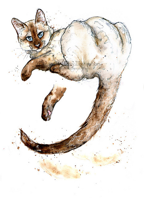 A Slightly Silly Siamese (WIP) on Flickr.